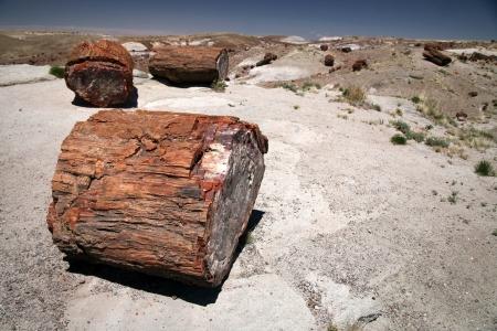 petrified fossil: Petrified Forest NP, Arizona, USA