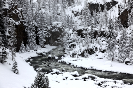 winter season in Yellowstone National Park,  USA photo