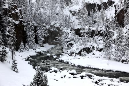 lower yellowstone falls: winter season in Yellowstone National Park,  USA