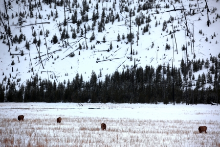 wild deers outdoors Stock Photo - 15818018