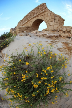 Flowers at old Ancient Roman aqueduct in Ceasarea at the coast of the Mediterranean Sea photo