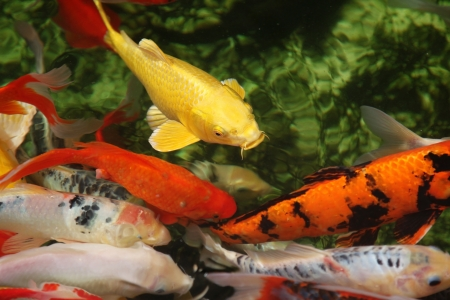 Tropical colorful fish Stock Photo - 15835315