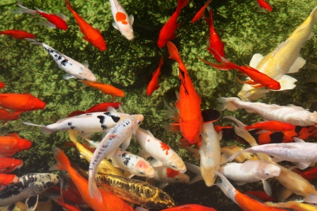 Tropical colorful fish Stock Photo - 15834936