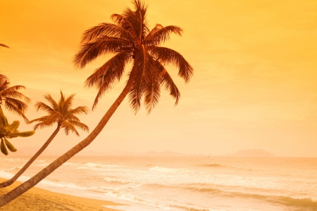 Beautiful sunset on tropic island Stock Photo - 15855636