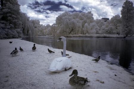 hyde: Hyde Park, London, England