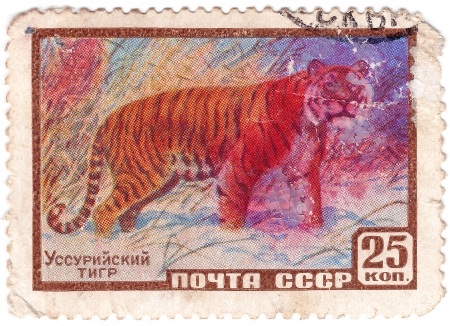 USSR - CIRCA 1961 : Stamp printed in USSR shows wild Ussuriisky Tiger, circa 1961 Stock Photo - 15876416