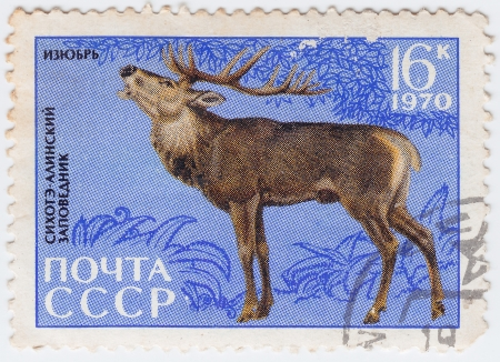 USSR - CIRCA 1970 : stamp printed in USSR show deer, circa 1970 Stock Photo - 15876406
