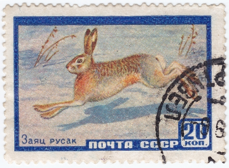 USSR - CIRCA 1961: stamp printed in USSR shows hare, circa 1961 Stock Photo - 15909176