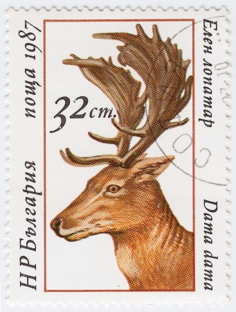BULGARIA - CIRCA 1987 : stamp printed in Bulgaria shows Fallow Deer, circa 1987  Stock Photo - 15909007