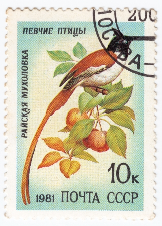 bird of paradise: USSR - CIRCA 1981 : stamp printed in USSR show bird paradise fly cather, circa 1981 Stock Photo