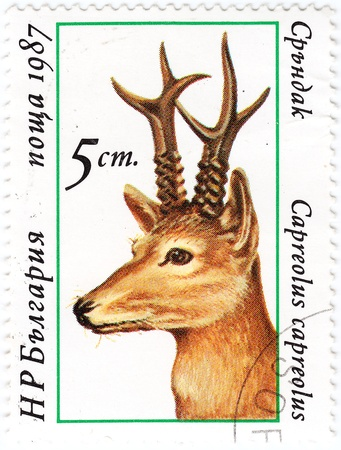 BULGARIA - CIRCA 1987 : stamp printed in Bulgaria shows European Roe Deer, circa 1987  photo