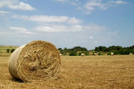 cropland: Rural field with circular hay bales