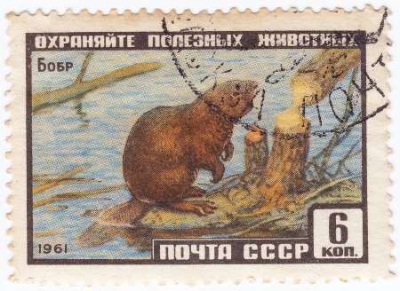 RUSSIA - CIRCA 1961 : Stamp printed in Russia shows beaver, circa 1961 Stock Photo - 16134633