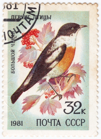 USSR - CIRCA 1981 : stamp printed in USSR show bird big chekan, circa 1981 Stock Photo - 16134638