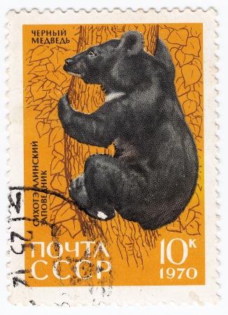 USSR - CIRCA 1970 : stamp printed in USSR show wild black bear, circa 1970 Stock Photo - 16134489