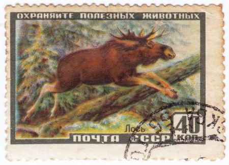 RUSSIA - CIRCA 1961 : Stamp printed in Russia shows European Elk, circa 1961 Stock Photo - 16134578
