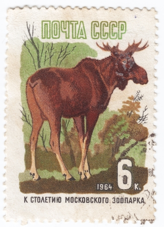 RUSSIA - CIRCA 1964 : Stamp printed in Russia shows European Elk, series 100th anniversary of the Moscow zoo, circa 1964 Stock Photo - 16134488