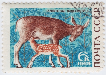 USSR - CIRCA 1989 : stamp printed in USSR show deer, circa 1969 Stock Photo - 16134710