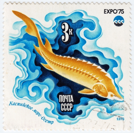 fish exhibition: USSR - CIRCA 1975 : Stamp printed in USSR shows image of a Sturgeon, Caspian Sea Oceanexpo 75 Emblem, circa 1975