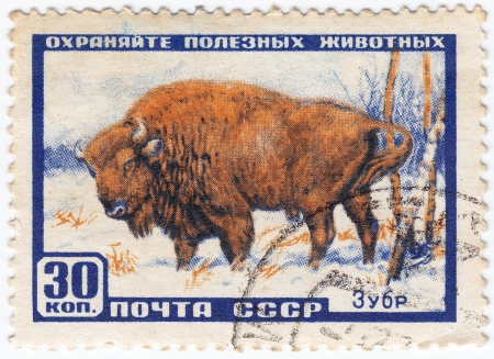 USSR - CIRCA 1961 : stamp printed in USSR show aurochs in save animals project , circa 1961 Stock Photo - 16237507