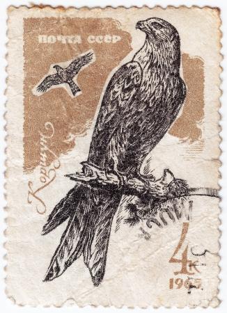 RUSSIA - CIRCA 1965 : post stamp printed in Russia shows wild kite, circa 1965 Stock Photo - 16238128