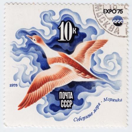 USSR - CIRCA 1975 : Stamp printed in RUSSIA shows Sea Duck, Arctic Sea  Oceanexpo 75 Emblem, circa 1975  Stock Photo - 16238448