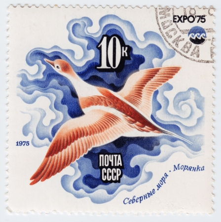 USSR - CIRCA 1975 : Stamp printed in RUSSIA shows Sea Duck, Arctic Sea  Oceanexpo 75 Emblem, circa 1975 Stock Photo - 16238448