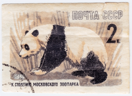 USSR - CIRCA 1964 : Stamp printed in USSR shows panda Bear from the series 100th anniv. of the Moscow zoo, circa 1964  Stock Photo - 16238244