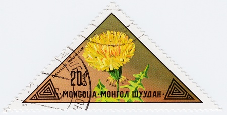 MONGOLIA - CIRCA 1973   stamp printed in Mongolia shows a flower Taraxacum Mongolicum, circa 1973 Stock Photo - 16239957