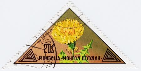 MONGOLIA - CIRCA 1973   stamp printed in Mongolia shows a flower Taraxacum Mongolicum, circa 1973 Stock Photo - 16239957