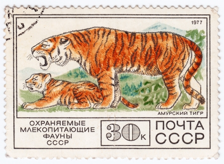 USSR - CIRCA 1977   Stamp printed in USSR shows wild Tiger, circa 1977 Stock Photo - 16240219