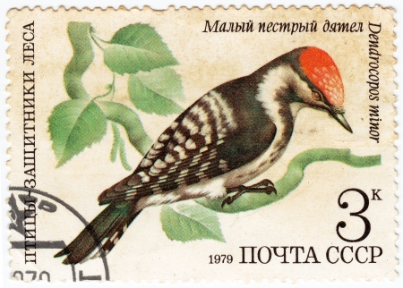 USSR - CIRCA 1979   stamp printed in USSR shows a Dendrocopos minor woodpecker , series Birds - the defenders of the forest, circa 1979  Stock Photo - 16238088