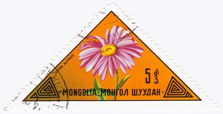 MONGOLIA - CIRCA 1973 : stamp printed in Mongolia shows a flower Aster Alpinus, circa 1973 Stock Photo - 16284233