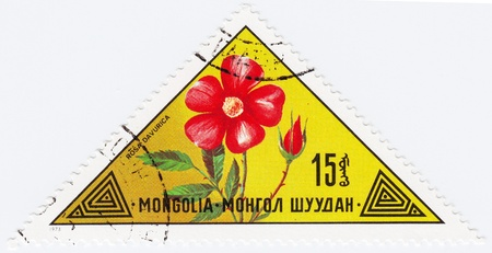 MONGOLIA - CIRCA 1973 : stamp printed in Mongolia shows a flower Rosas Davurica, 1973 Stock Photo - 16284241
