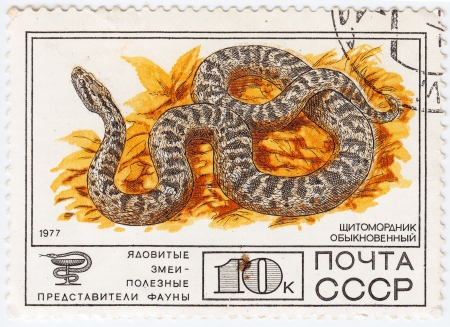 RUSSIA - CIRCA 1977 : stamp printed in Russia shows Venomous snakes useful for medicinal purposes, Gloydius, circa 1977