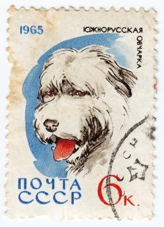 USSR - CIRCA 1965: timbre imprimé en URSS spectacle du Sud - Russie berger, vers 1965