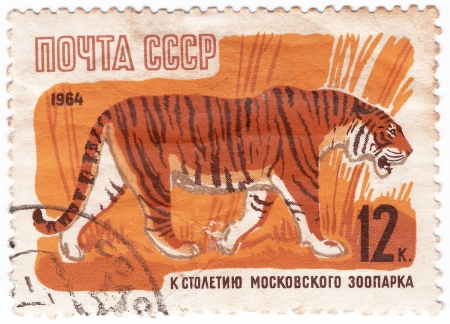 USSR - CIRCA 1964 : Stamp printed in USSR shows Tiger from the series 100th anniv. of Moscow zoo, circa 1964  Stock Photo - 16284240