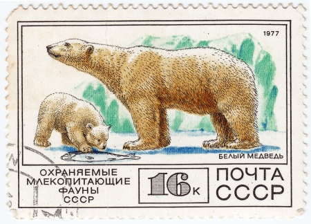 USSR - CIRCA 1977 : stamp printed in USSR show white bear, circa 1977