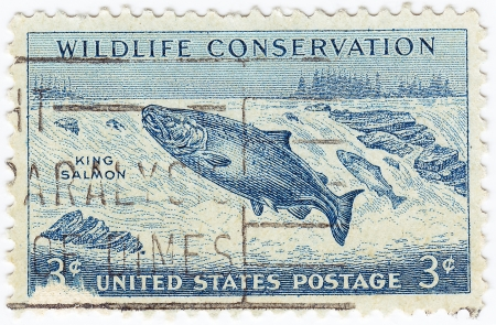 king salmon: USA - CIRCA 1950 : stamp printed in USA with King Salmon in Wildlife Conservation program, circa 1950
