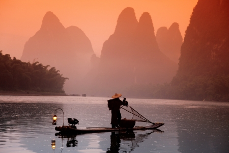 trained: Chinese man fishing with cormorants birds, Yangshuo, Guangxi region, traditional fishing use trained cormorants to fish