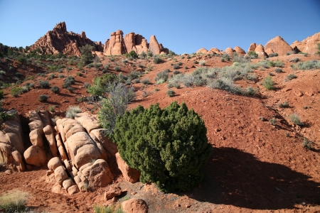 Rock formation in Arches National Park, Utah, USA photo