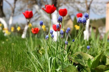 spring blossom flowers Stock Photo