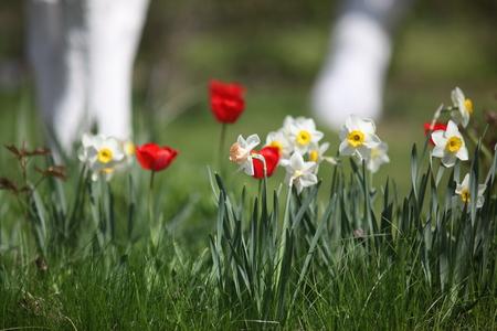 the blossom flowers