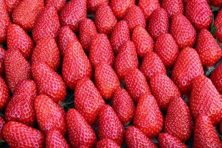 luscious: freshly harvested strawberries