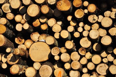 Deforestation, felled trees, logs on the ground Stock fotó