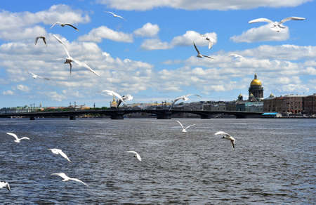 Seagulls flying in a cascade on the river Neva, in the background St. Isaac's Cathedral.