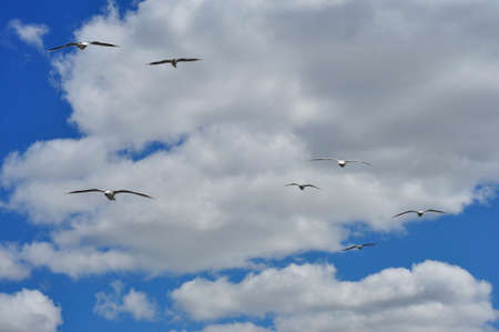A flock of gulls flying away into the blue sky with white clouds. Фото со стока