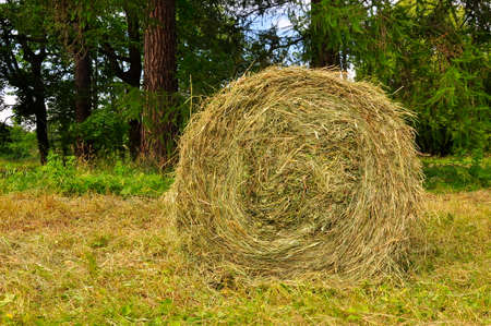 A stack of dry hay rolled into a roll in the field.
