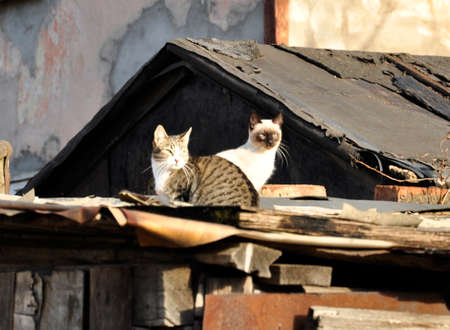Two cats sitting on the roof.