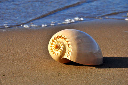 Lone spiral seashell on a sandy background.